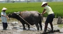 hoi an - farming and fishing (13)