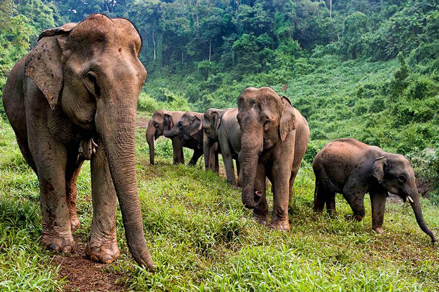 The Elephant Village