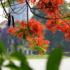The Four Seasons of Hanoi