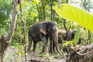 Elephant Sanctuaries in Thailand