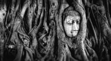 thailand-buddha-2937911